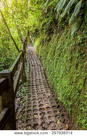 Walkpath in Arenal Hanging Bridges Park in Costa Rica