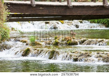 Krka, Sibenik, Croatia, Europe - A Duck Resting On A Stone With Some River Cascades