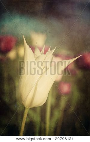 Vintage stylized tulip growing outdoors in the spring