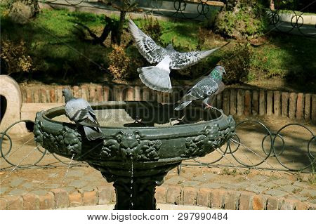 Pigeon flying up from the fountain with another still perching, Cerro Sata Lucia park, Historic park in Santiago, Chile poster