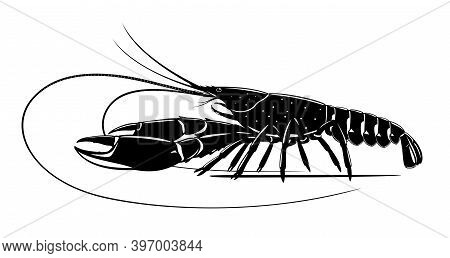 Realistic Red Claw Crayfish Black And White Isolated Illustration, One Big Freshwater Australian Cra