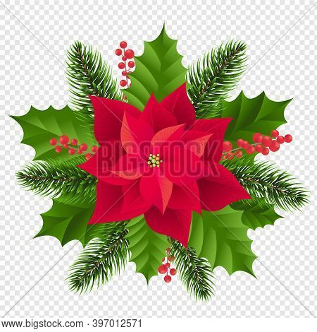 Red Poinsettia Isolated With Fir Tree Transparent Background With Gradient Mesh, Vector Illustration