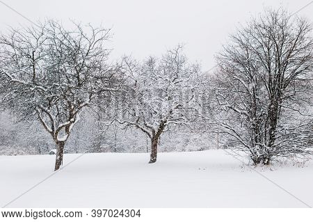 Beautiful Winter Landscape Scene View. Christmas Winter Card. Three Trees Under Snow In Park Outdoor