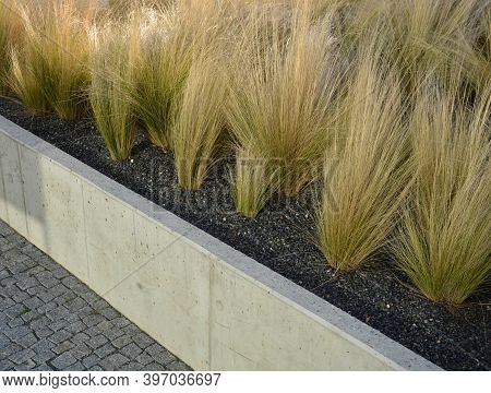 Stipa Tenusissima In High Flowerbed With Concrete Edge Ornamental Grasses Dry Yellow Flowerbed Mulch