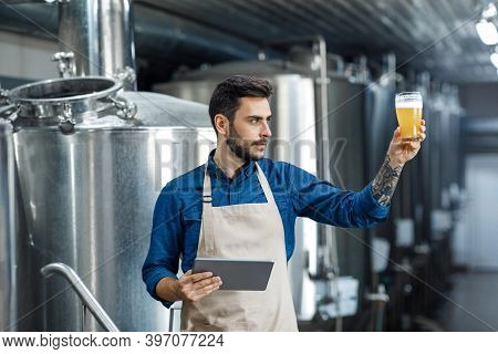 Product Quality, Brewery And Plant Management. Young Guy Worker Or Owner In Apron With Tablet Checks