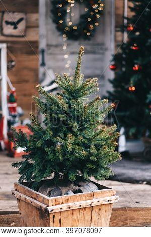 Small Christmas Tree In A Wooden Pot In The Backyard With Christmas Decorations. High Quality Photo
