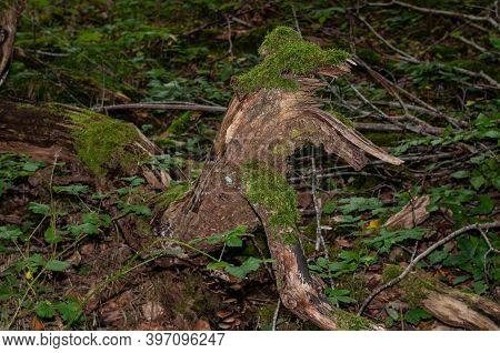 Moss Growing On A Rotting Tree Lying On Ground In A Dark Forest