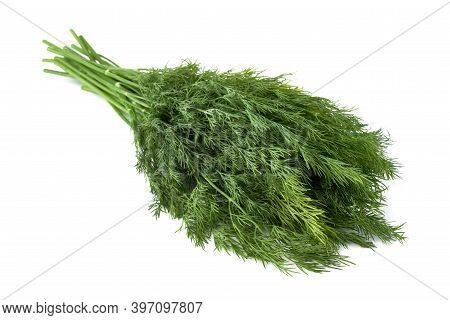 Fresh Green Dill Background. Green Dill Texture. Bunch Of Dill. Seasoning. Spice For Different Dishe