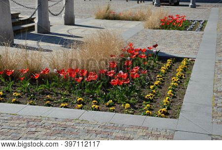 Yellow And Red Tulips Flowers In A Curved Flowerbed In A Square In The Street Cobblestone Gray And B