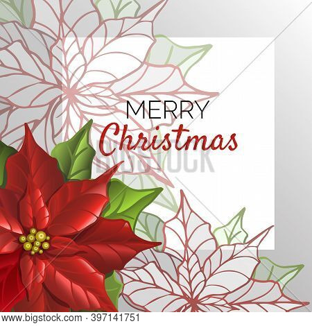 Postcard Christmas Template With Poinsettia Flowers. Floral Background. Stylized Poinsettia.