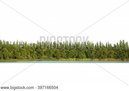View Of A High Definition Tree Line Isolated On A White Background.