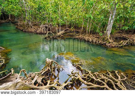 Amazing Crystal Clear Emerald Canal With Mangrove Forest At Thapom Krabi Thailand ,emerald Pool Is U