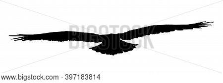 Falcon, Hawk, Eagle Or Orel Black Silhouette Isolated On White Background. A Large Predator Soar In