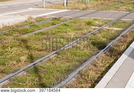View To Tramway Tracks Beside A Street In The City With Grass And Weed Growing Between