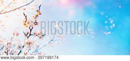 Hello Spring Concept. Flowering Fruit Tree With Lens Flare Bokeh On Sunny Sky Background.
