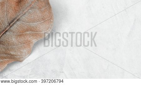 Botanical earth tone wallpaper and background