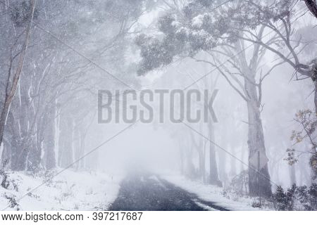 Blizzard Snow Conditions In Winter Along A Road Near Oberon, Australia.  The Road Disappears Into Th