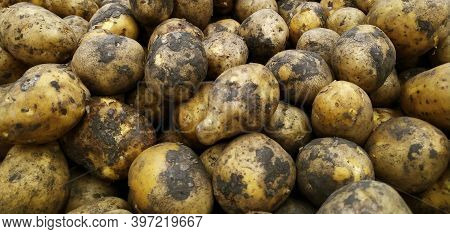 Potatoes. Fresh Organic Potatoes In The Store. Close-up. Vegetables. Harvest. The Texture Of The Veg