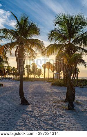 Palm Trees On Miami Beach At Sunrise, Miami, Florida.
