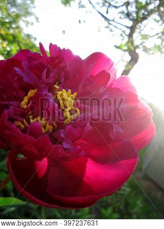 Wild Beauty Flower With Nectar Blooming In Field Countryside. Nature Countryside Consisting Of Wild