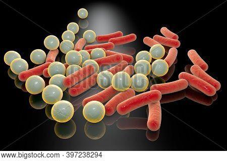 Rod-shaped And Spherical Bacteria, Escherichia Coli, Salmonella,