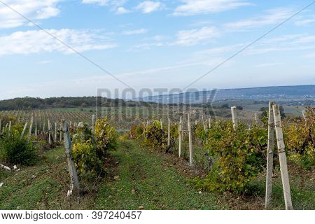 View Of Vineyards And Mountains In Crimea In Autumn