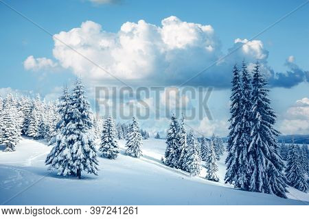 Incredible winter landscape with snowy spruces on a frosty day. Location place Carpathian mountains, Ukraine, Europe. Christmas holiday concept. Photo wallpapers. Happy New Year! Beauty of earth.