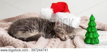 Christmas Cat Kitten In Santa Claus Hat Sleeping Near Christmas Tree Miniature. New Year Gray Tabby