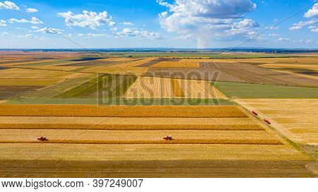 Above View Over Agricultural Fields, Cultivated Plots In Harvest Season, Two Harvesters Are Harvesti