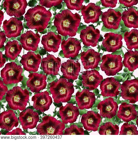 Hollyhock Maroon Flowers With Stems Floral Seamless Pattern