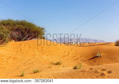 Desert Landscape With Sand Dunes, Residential Buildings, Wild Ghaf Trees And Grass Tufts, Hajar Moun