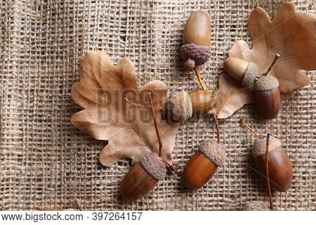 Acorns And Oak Leaves On Sackcloth, Flat Lay