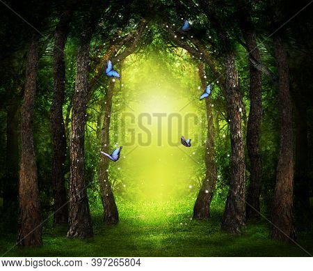 Fantasy World. Enchanted Forest With Magic Lights, Beautiful Butterflies And Way Between Trees