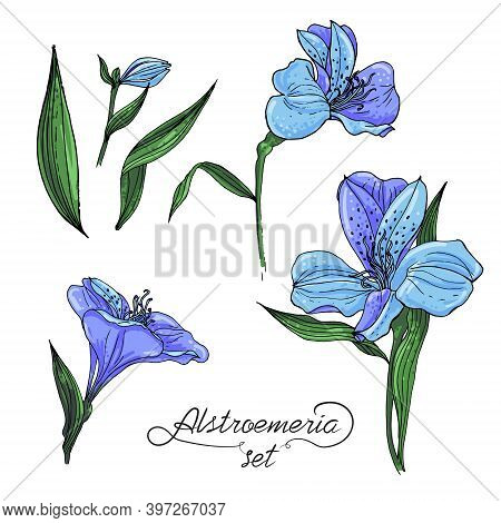 Alstromeria Blue Branch Isolated On White. Beautiful Alstroemeria Collection For Your Personal Desig