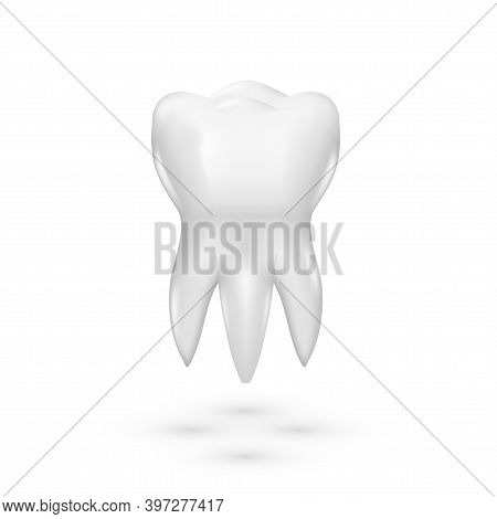 3d Dental Model Of Premolar Clear Healthy Tooth