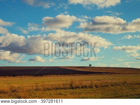 Arable Field With Cloudy Sky And Alone Tree On Background