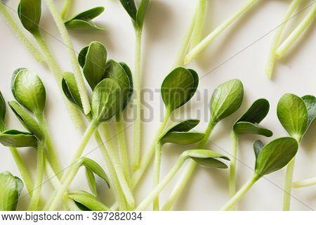 Pumpkin Microgreens. Sprouting Microgreens. Seed Germination At Home.