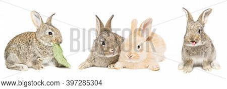 Cute Red And Grey Easter Rabbit Bunny Isolated On White Background