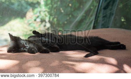 Two Black Fluffy Kitten Sleeping Side By Side