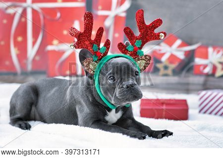 Blue Young French Bulldog Dog Dressed Up With Reindeer Antlers Headband And Bow Tie In Front Of Fest