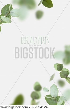 Flying Fresh Green Branches Of Eucalyptus On Light Gray Background. Flat Lay, Top View, Mock Up. Nat