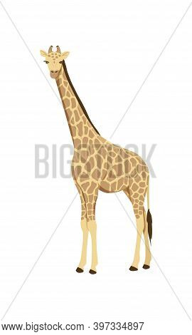 Icon Of African Giraffe. Wild Savannah Giraffe. Zoo Or Wildlife Theme. Cartoon Vector Illustration I
