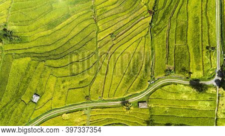 Beautifful Rice Fields In Bali. Famous For The Paddy Rice Fields In Asia.