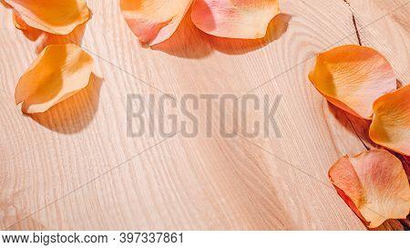 Rose Petals On Wood In Sunlight. Simple Rural Beauty.