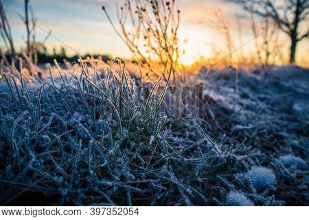 Brightly Lit Frozen, Snow Covered Plants During The Sunrise Hour. Small Winter Svenery With A First