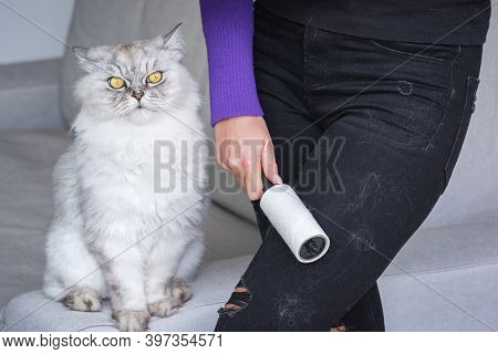 Woman Cleaning Clothes With Clothes Roller Or Lint Roller From Cats Hair. The Cat Sheds. Animal Hair