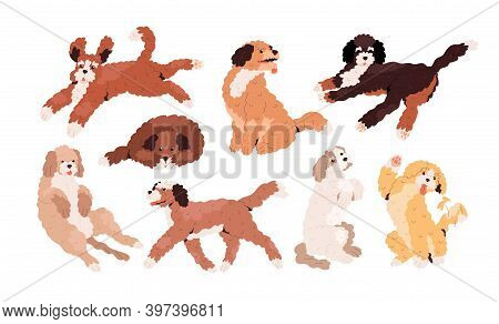 Set Of Cute Playful Goldendoodles And Labradoodles. Golden, Tan And White Curly-haired Dogs Running,