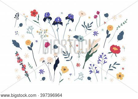Botanical Collection Of Various Blooming Flowers And Green Branches With Leaves. Floral Design Eleme