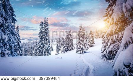 Majestic winter landscape with snowy spruces on a frosty day. Location place Carpathian mountains, Ukraine, Europe. Christmas holiday concept. Photo wallpapers. Happy New Year! Beauty of earth.