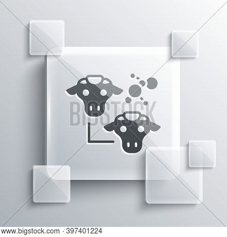Grey Cloning Icon Isolated On Grey Background. Genetic Engineering Concept. Square Glass Panels. Vec
